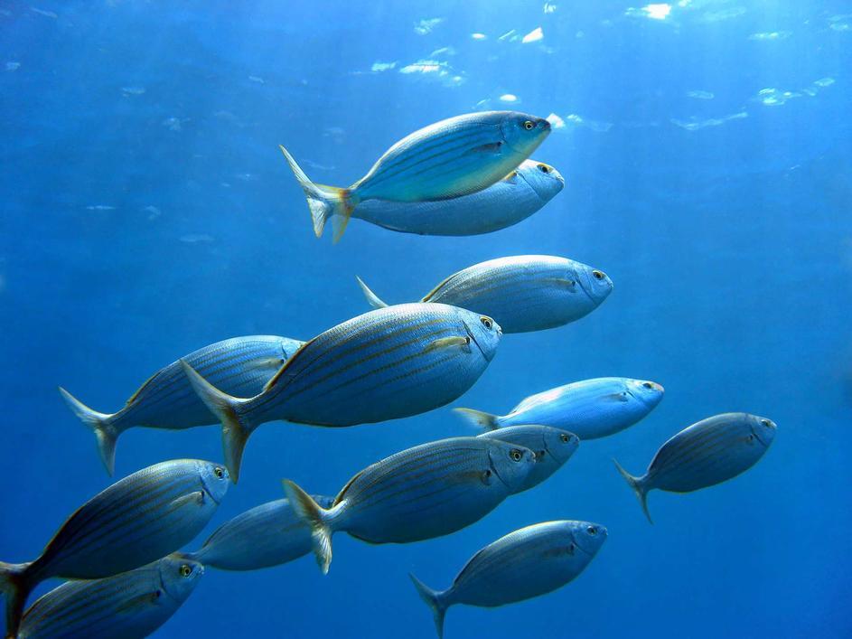 Jedite zdravo i ono što vrijedi– ribu Hrvatske