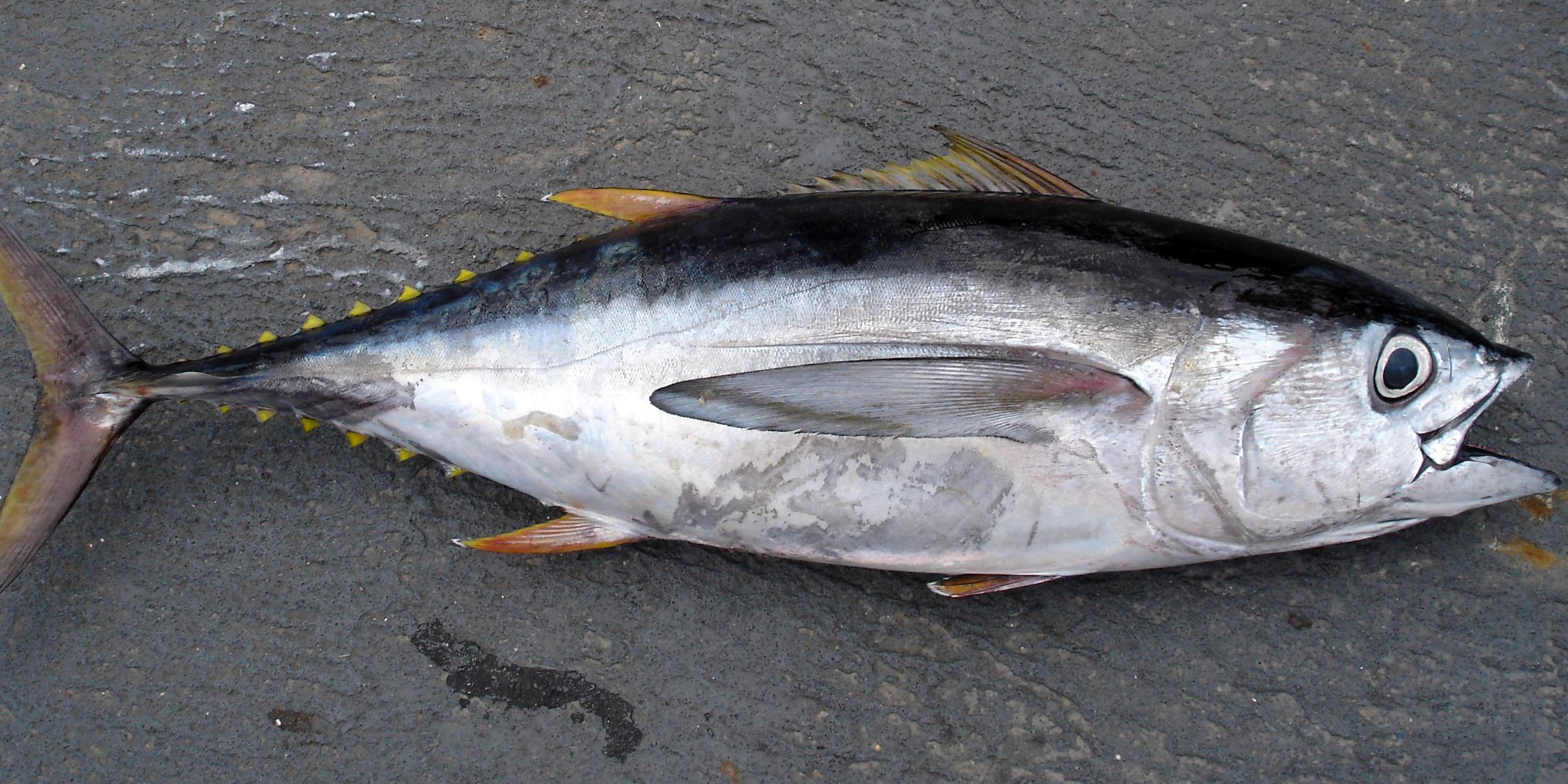 Sve što trebate znati o tuni