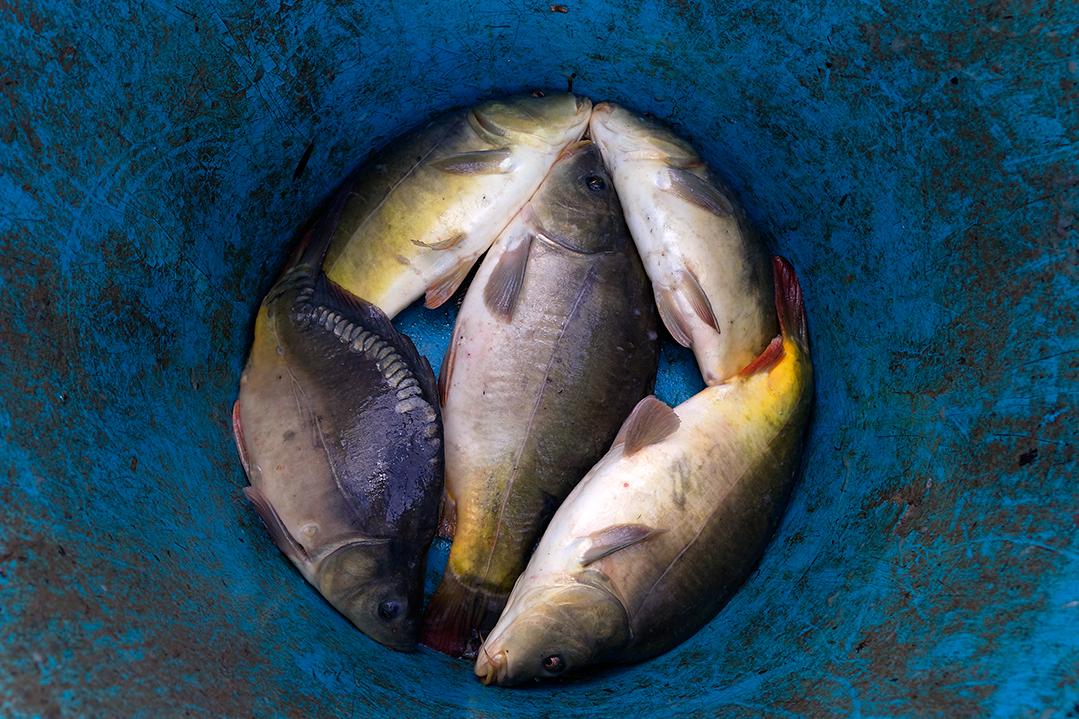 Riječna riba na jelovniku