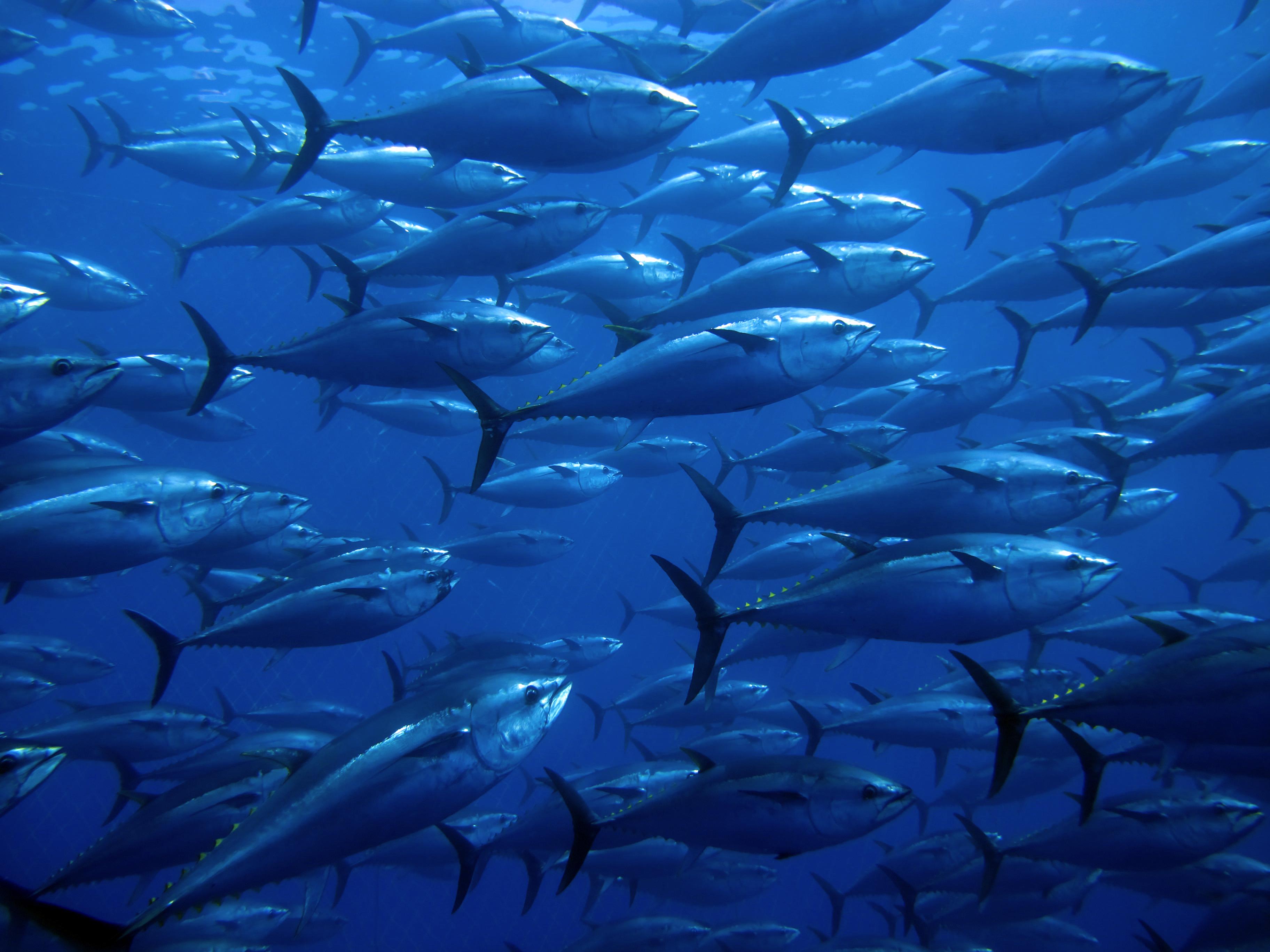 Pet opasnosti iz mora – istina i zablude