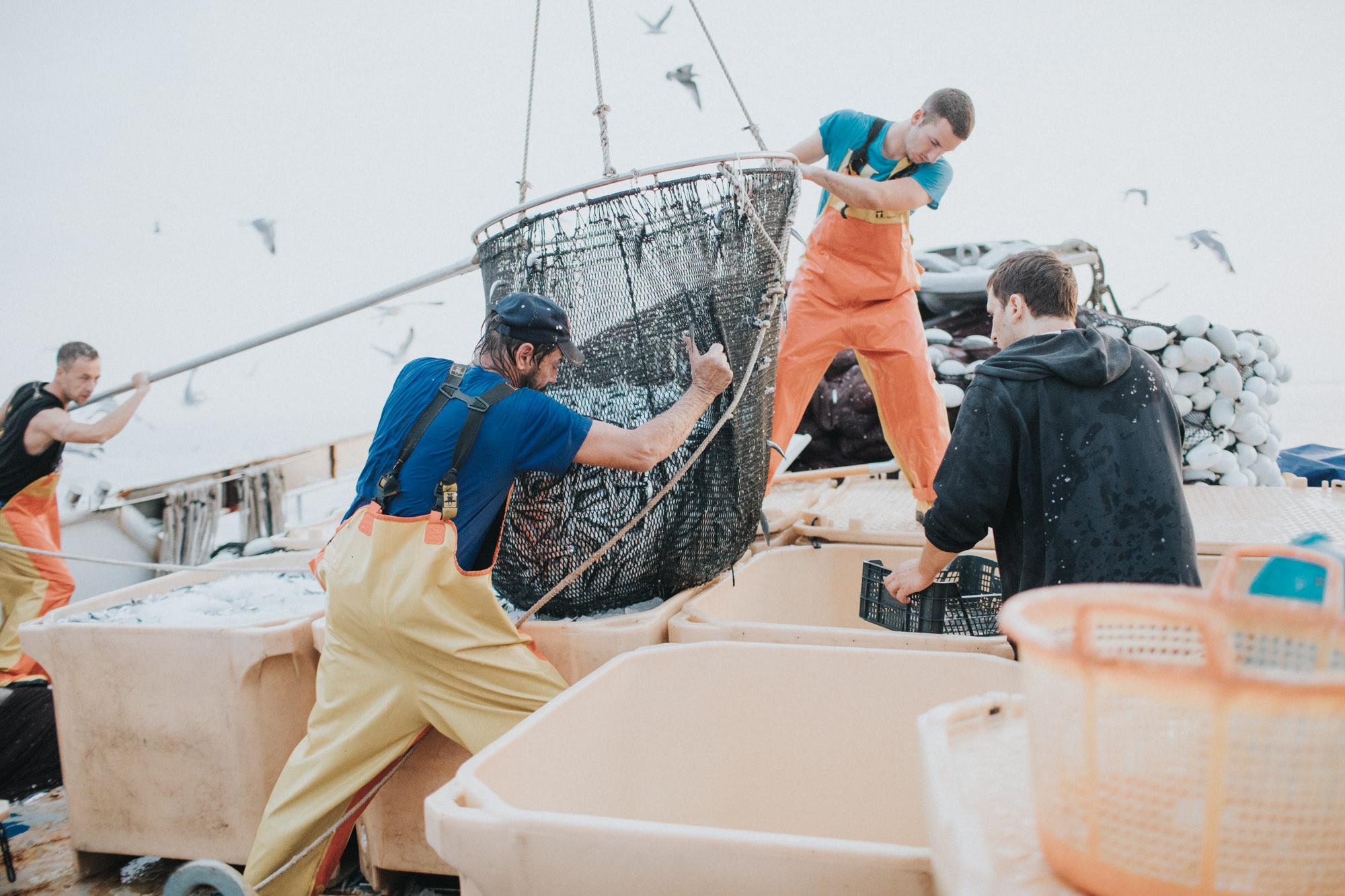 Upravljanje ribolovom male plave ribe u Republici Hrvatskoj