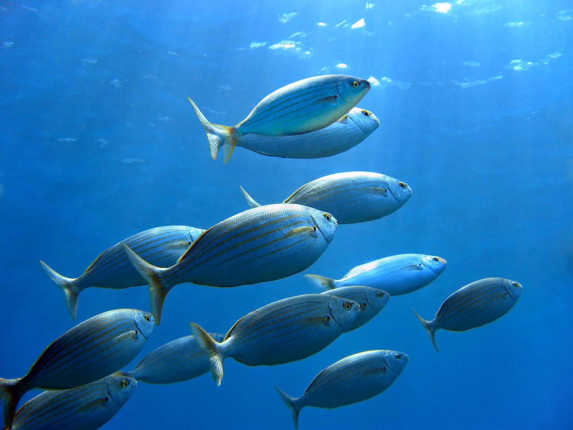 Riba – kvalitetan obrok dostojan kralja
