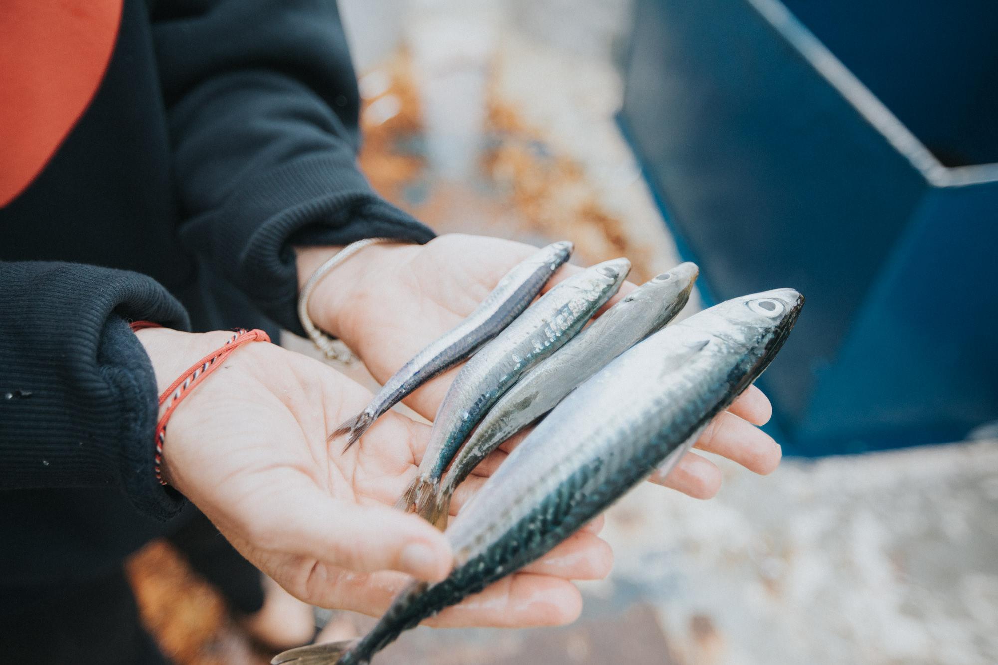 Zašto kupovati održive proizvode iz ribarstva?