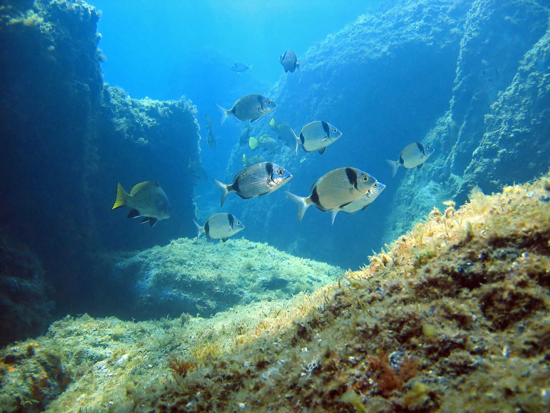 Morske vrste koje se ne bi smjele naći na tanjuru