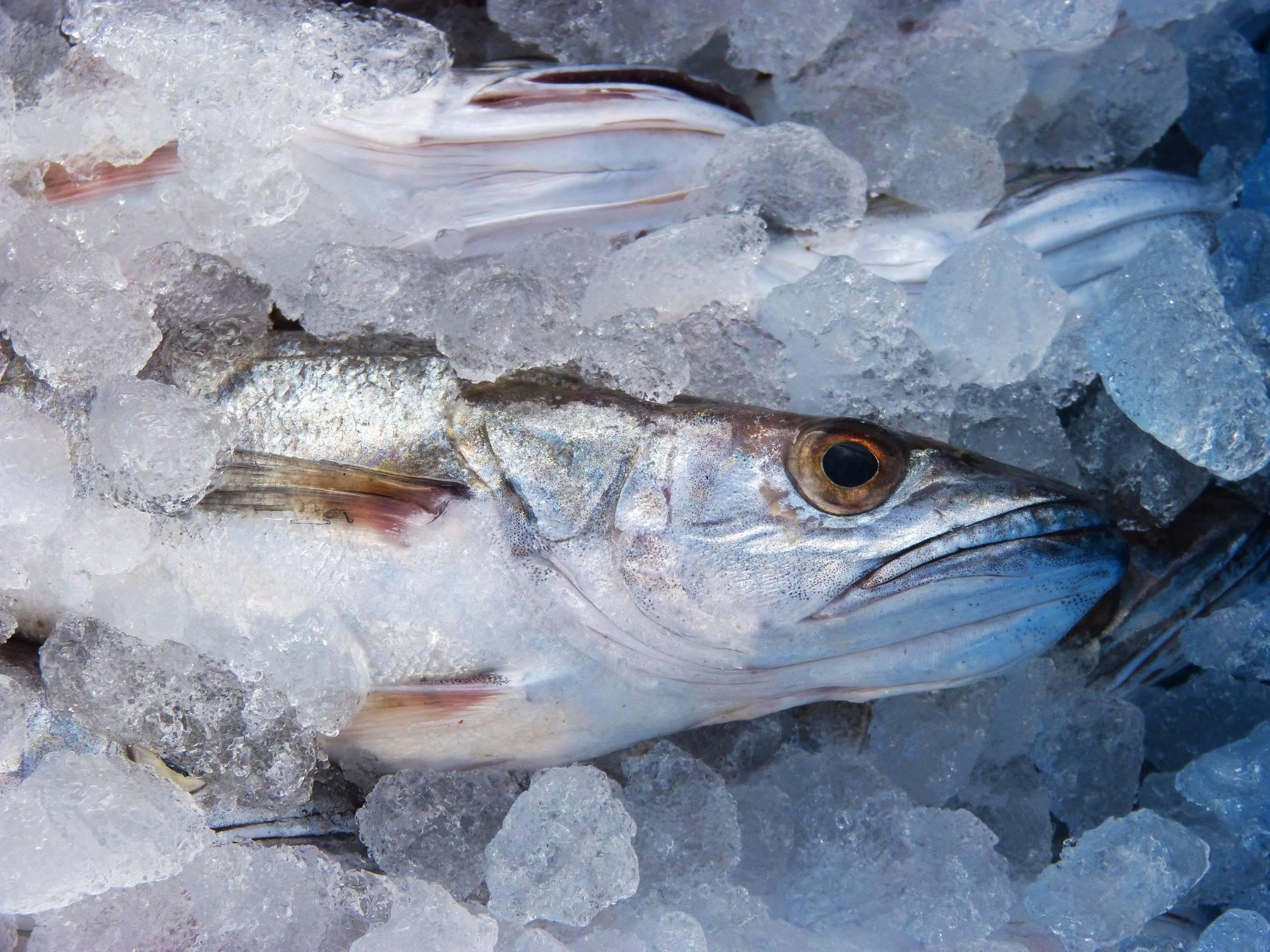 Kako jesti bijelu ribu bez stezanja remena ?