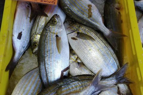 Najčešće riblje vrste na zagrebačkoj peškariji