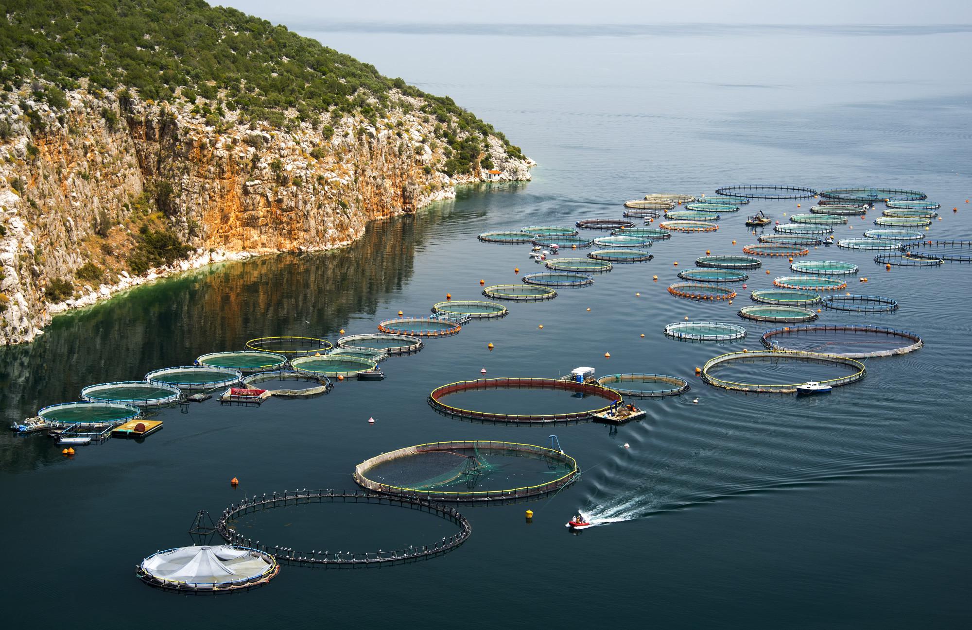 Certificiranje u akvakulturi – ASC