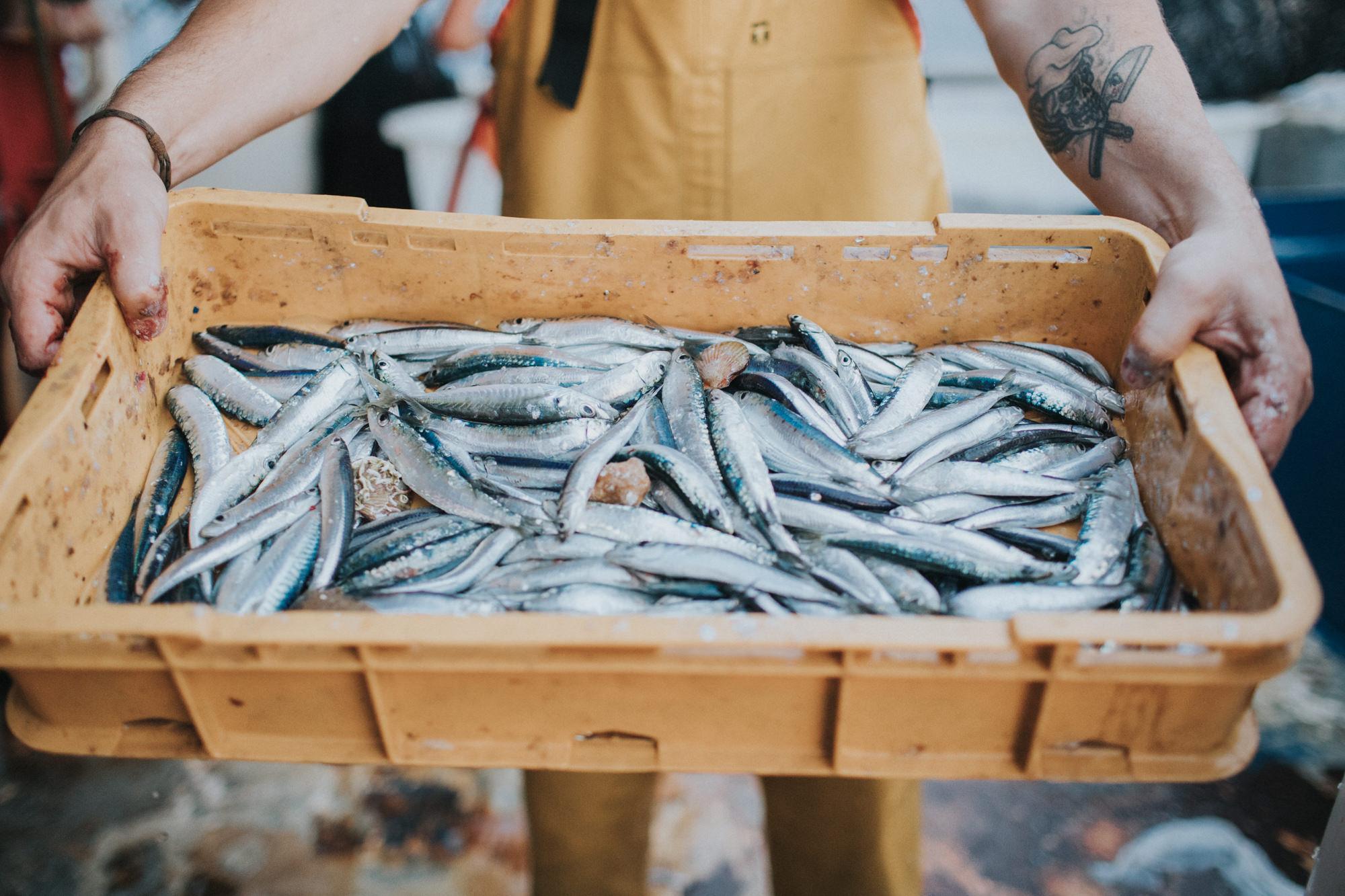 Kontrola virusa u ribljoj industriji