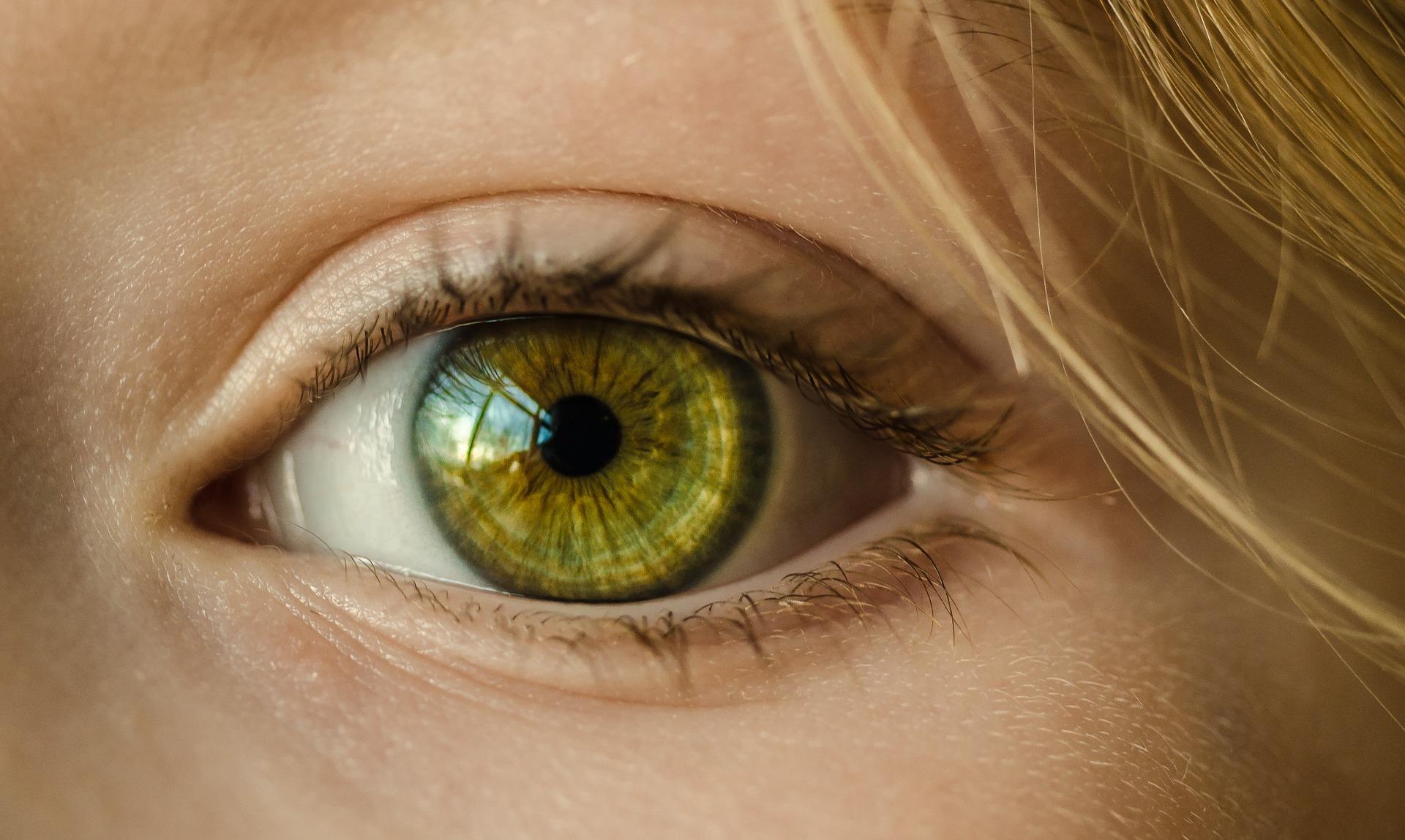 Riba i školjke čuvaju oči