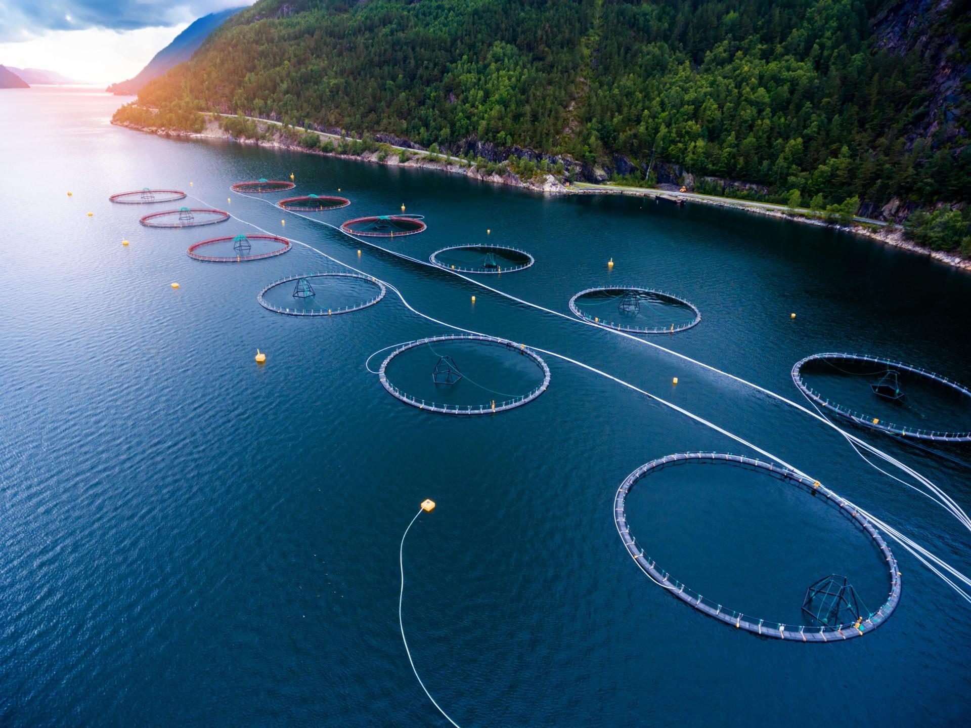Hranidba riba kao temeljna tehnološka odrednica akvakulture