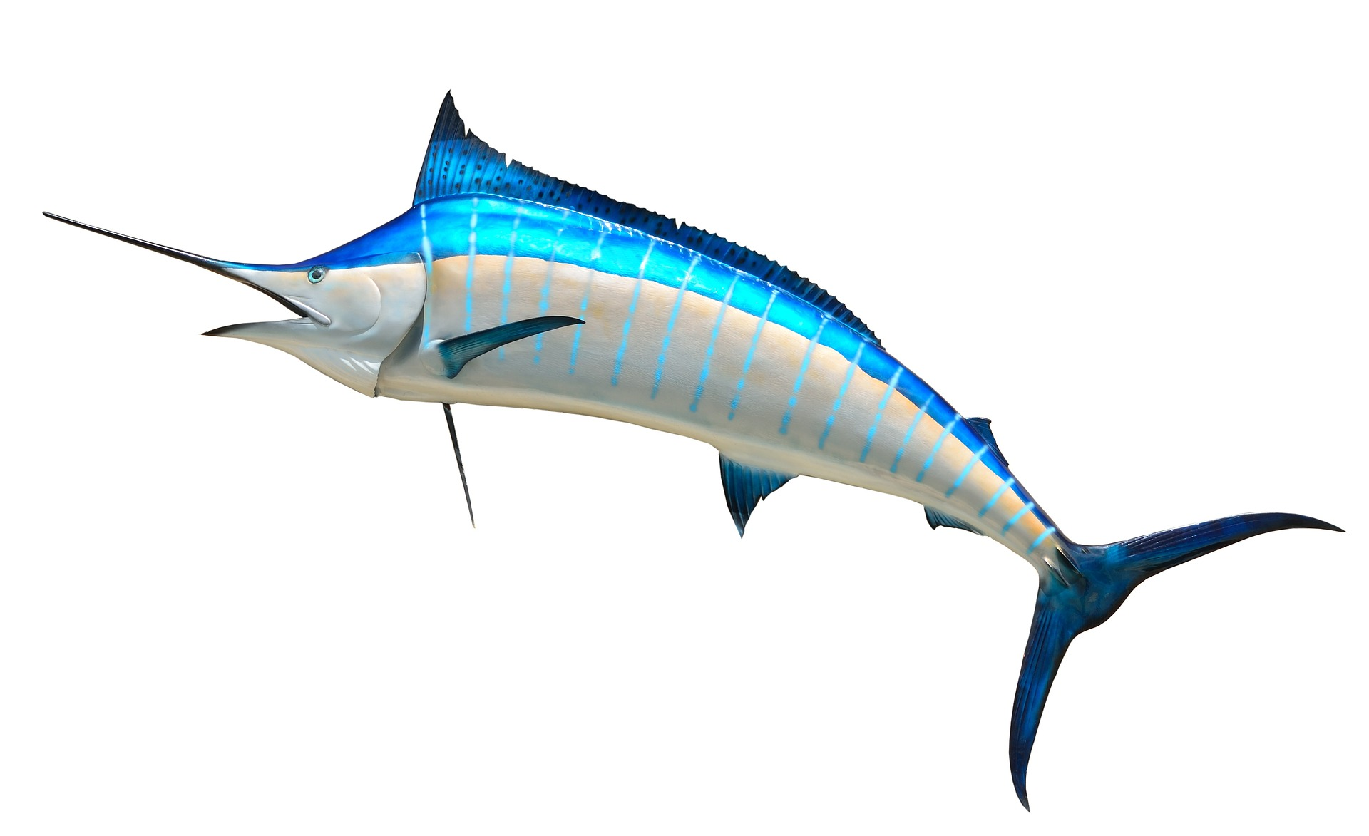Lov na veliku ribu (Big game fishing)