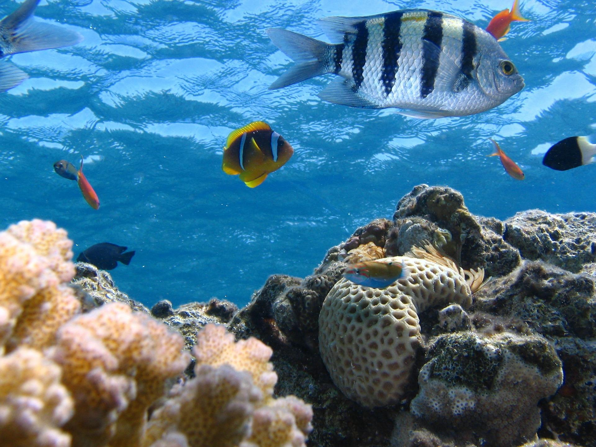 Korištenje stranih i lokalno neprisutnih vrsta u akvakulturi