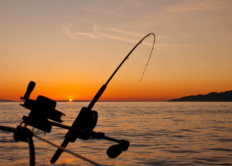 Osim kao namirnica, srdela je odlična i kao mamac za ribolov!