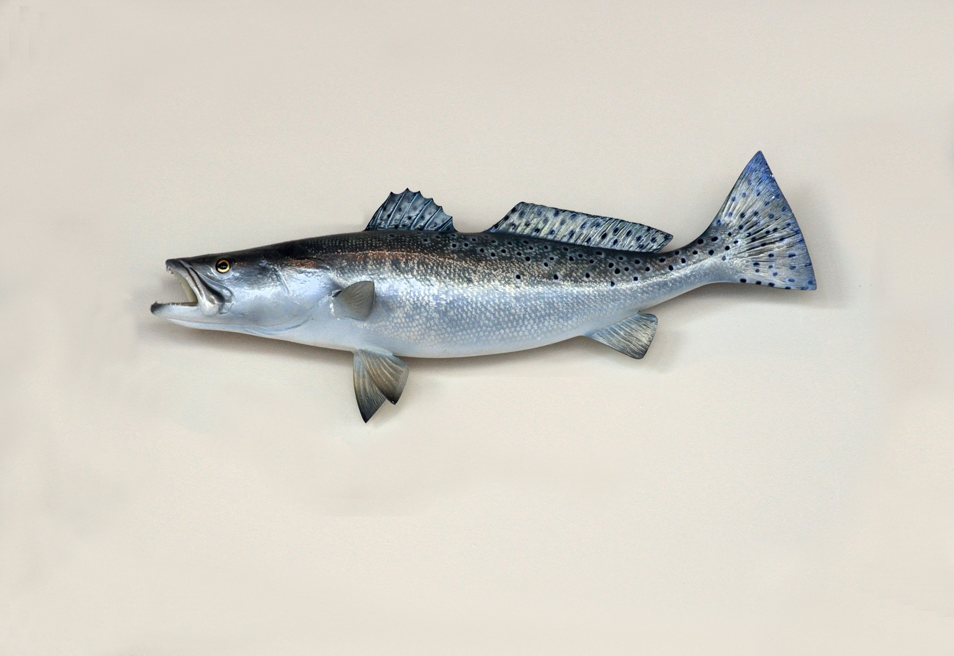 Jeste li čuli za domaćeg umjetnika koji preparira ribu?