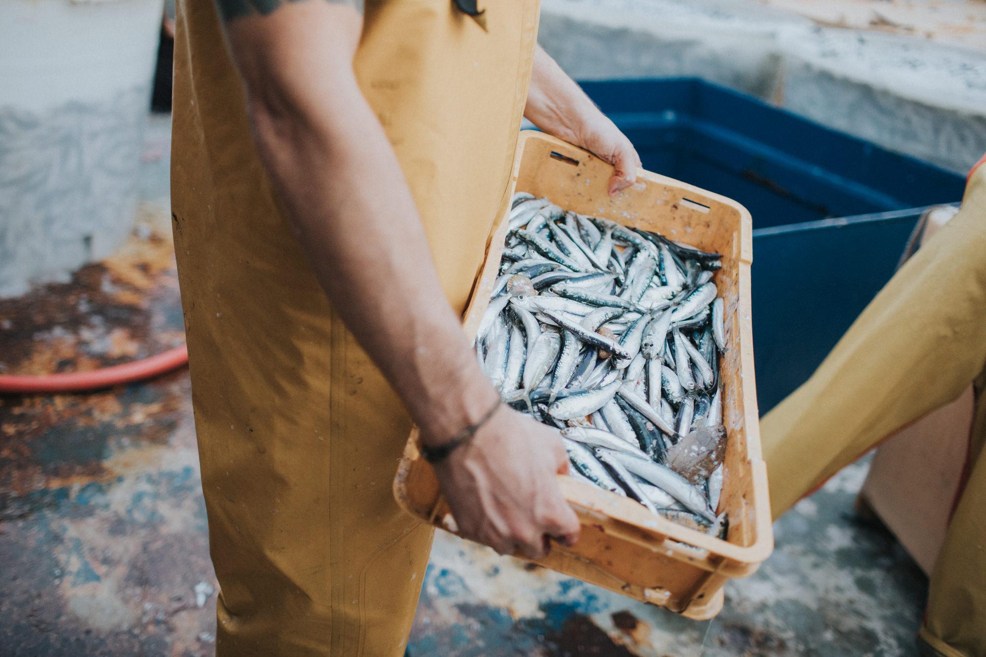 Top trendovi istraživanja za održivo ribarstvo