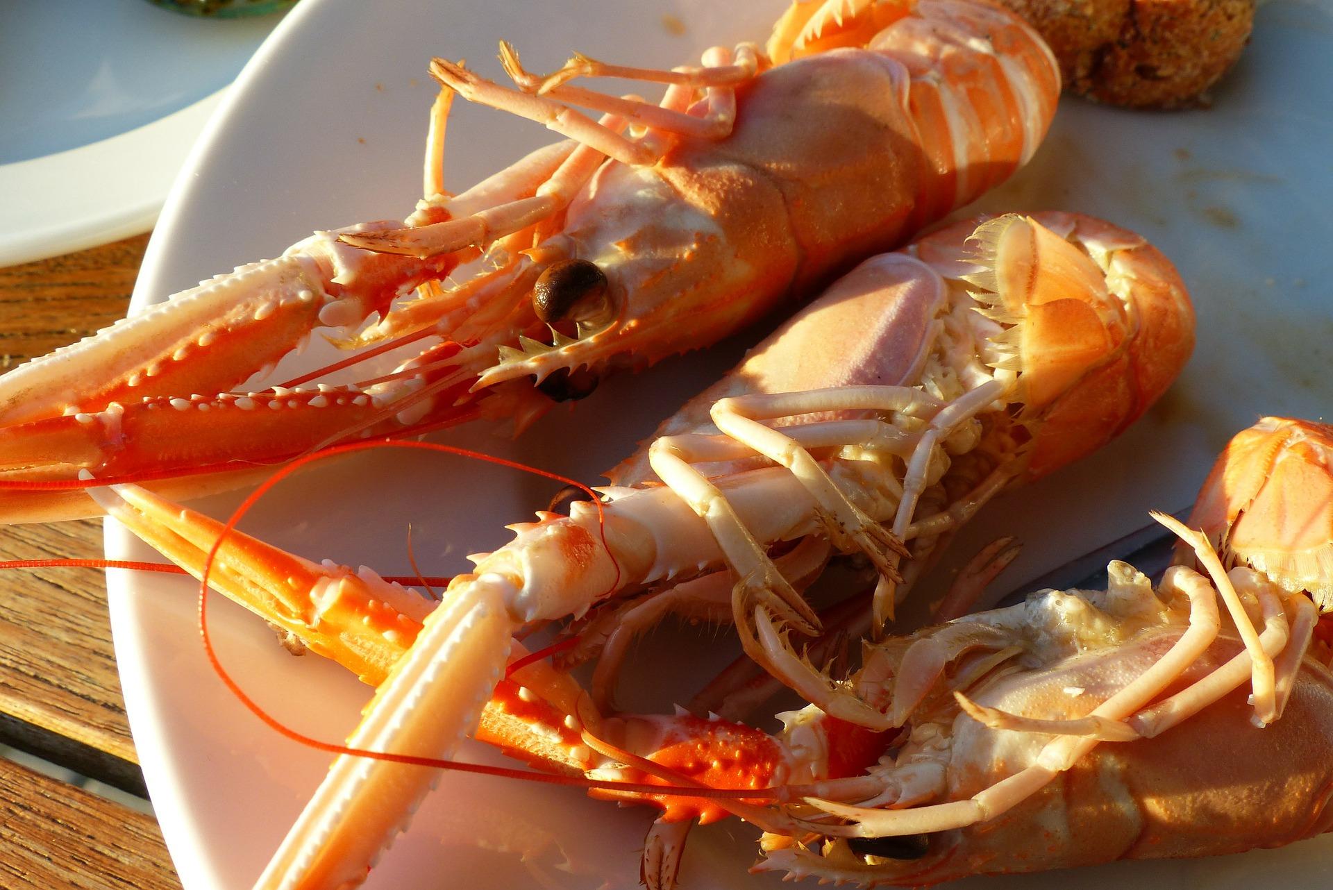 Škampi – delikatesa iznimne nutritivne vrijednosti