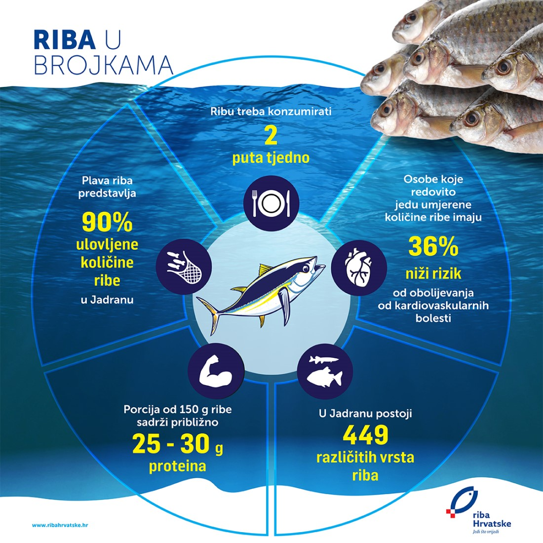 Riba u brojkama