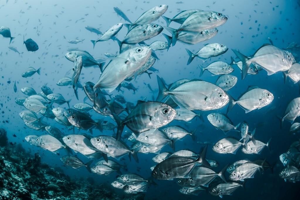 Kako će se mijenjati proizvodnja, a kako konzumacija ribe u narednih 10 godina?